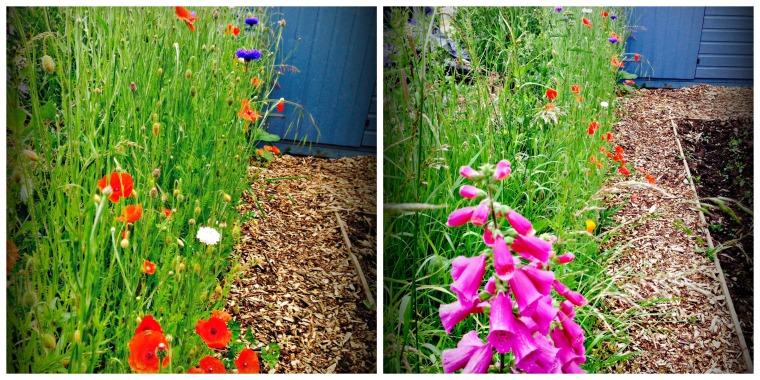 2 Flower Collage