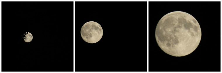 Moon Coll