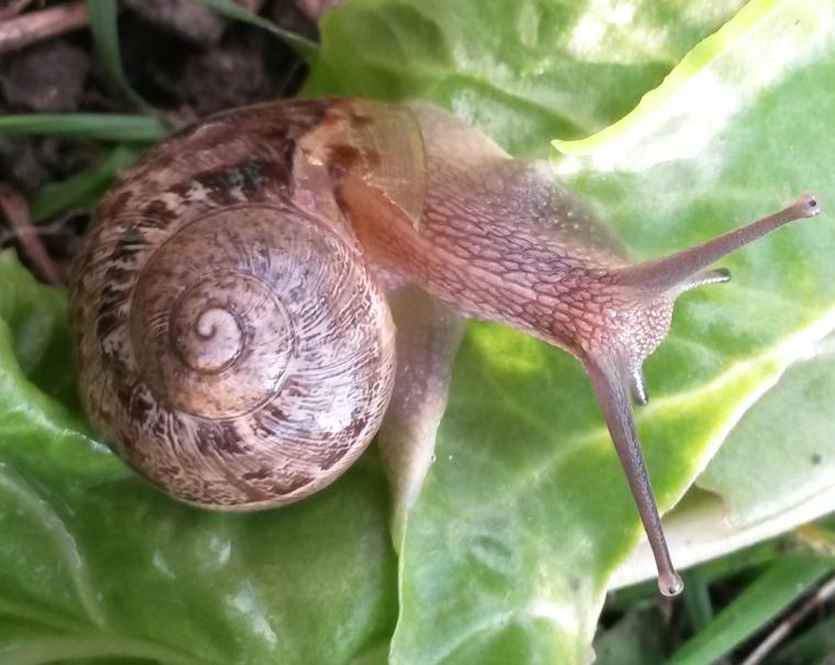 SnailTale
