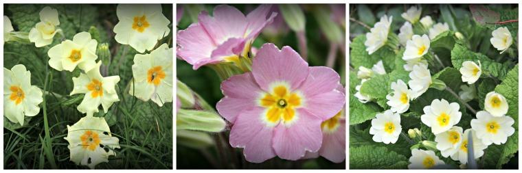 flowers1