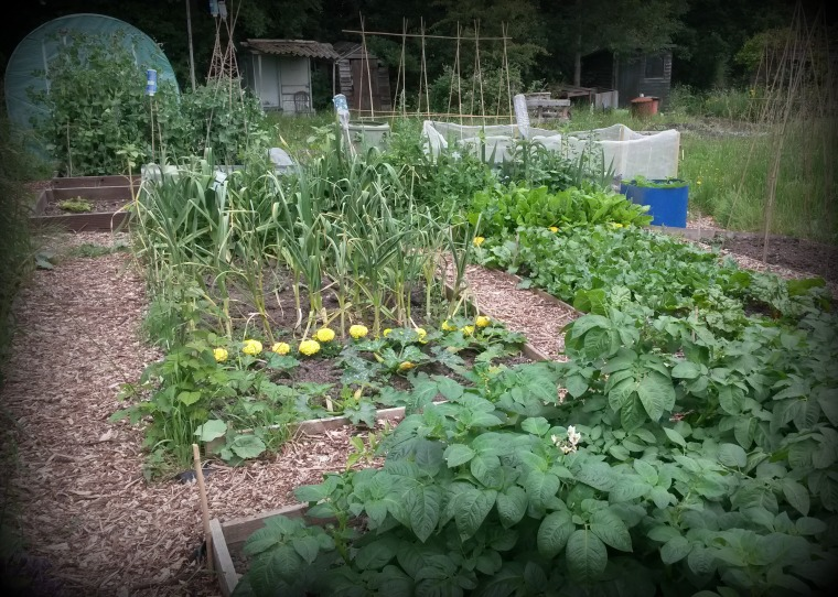 Allotment14June15