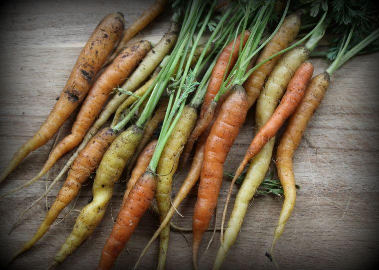 Reject Carrots