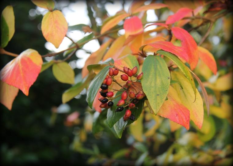 Berries&Leaves