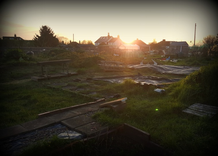Allotment Sunset April 2016
