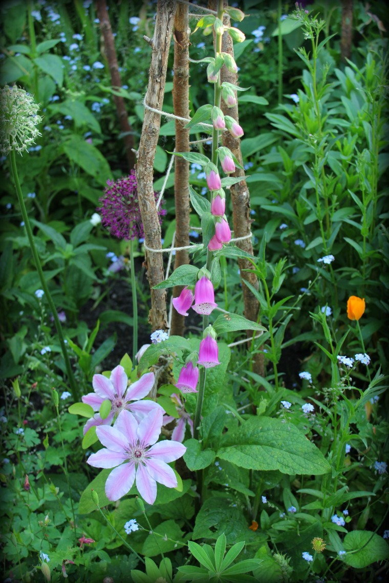 Clematis & Digitalis
