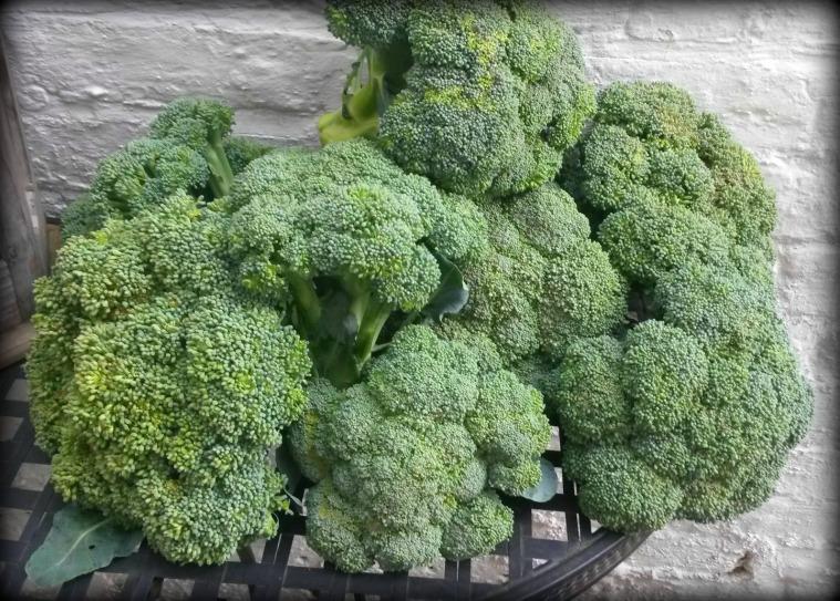 8broccoli