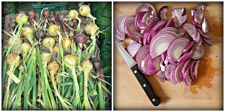 Onion Collage