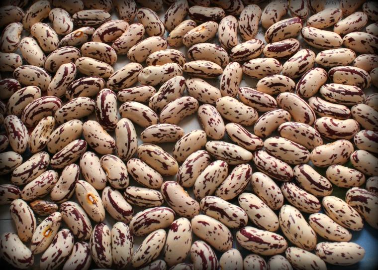 borlotti-beans
