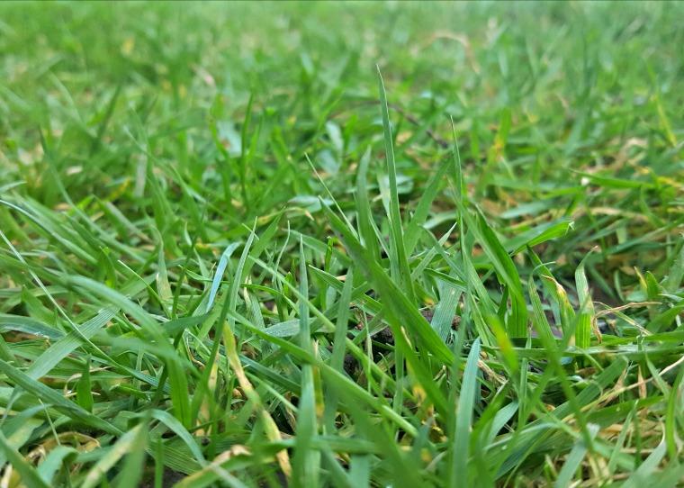 1grass