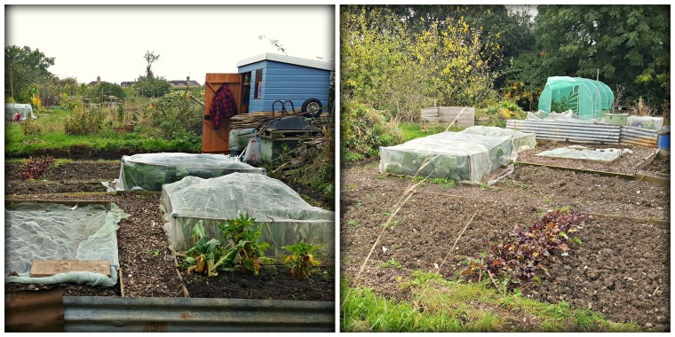 allotment-collage