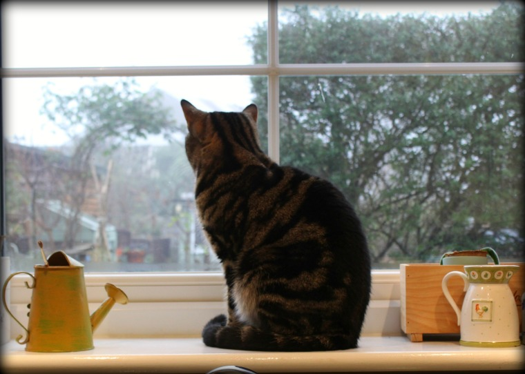 daisy-at-the-kitchen-window