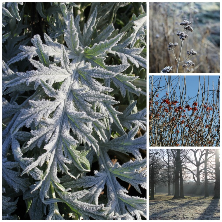 frost-collage1