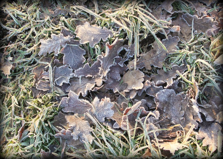 Frosty Leaves.jpg