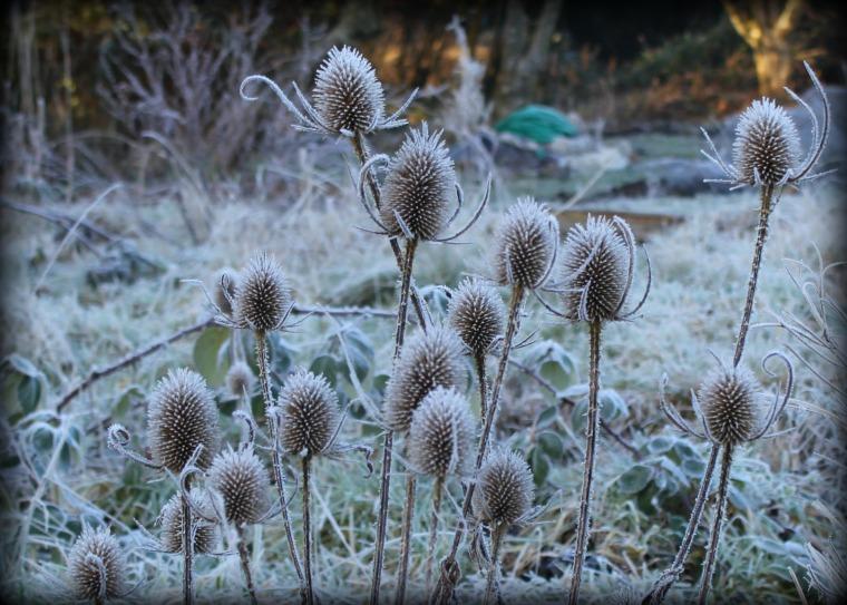 frosty-plot-3