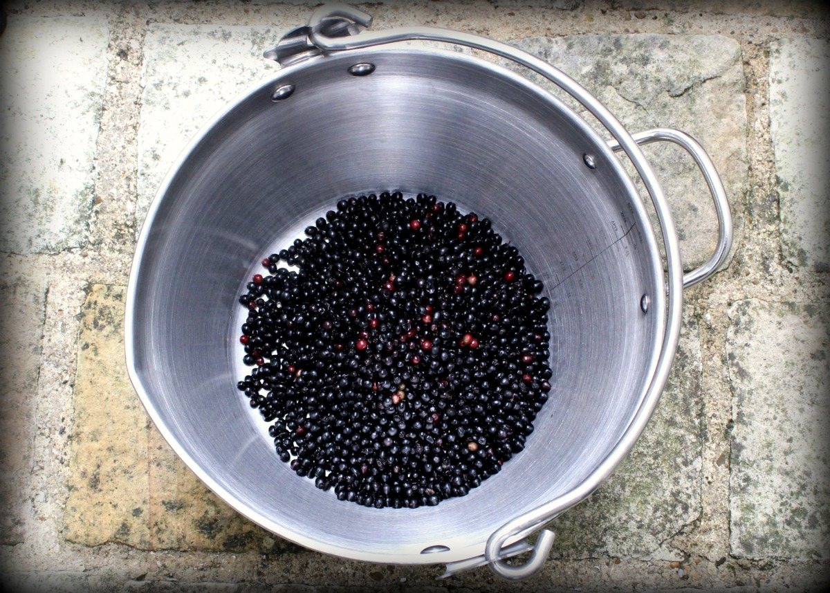 The Elderberry Experiment