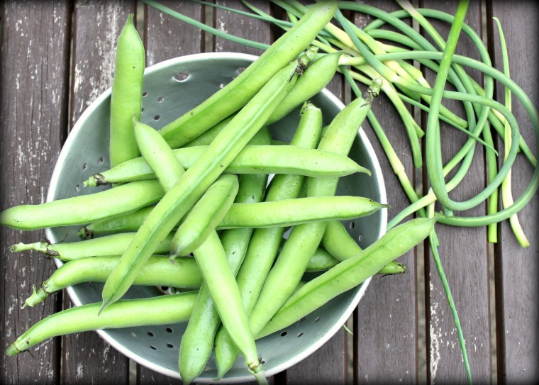 Broad Beans and Garlic Scapes
