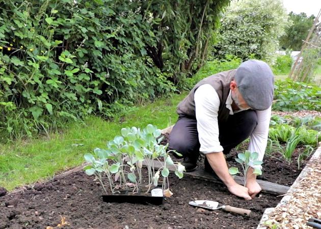 5 Easy Gardening Jobs for June – AGENTS OF FIELD